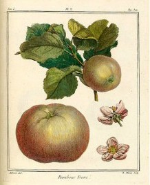 Treatise On Fruit Trees