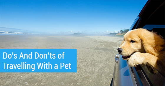 Do's And Don'ts Of Travelling With A Pet